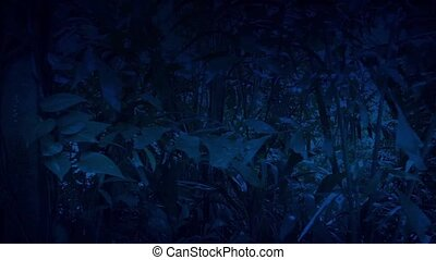 Moving Through Jungle At Night - Tracking shot moving past...