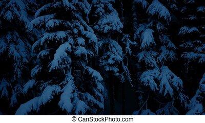 Night Aerial Through Snowy Woodland - Descending through the...