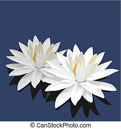 Lotus is isolated on blue background - Vector illustration...