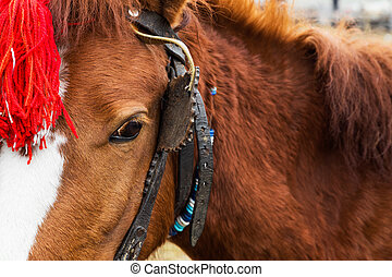 Harnessed horse with a red head decoration - Close up of the...
