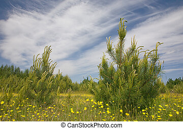 Young pine tree among grass and yellow flowers against blue...