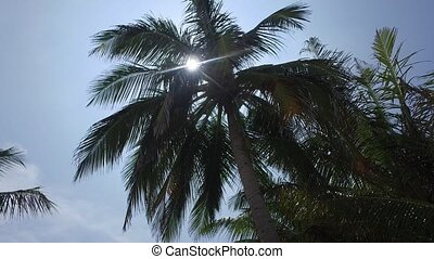 palm trees and sun rays in sky - travel, tourism, vacation,...