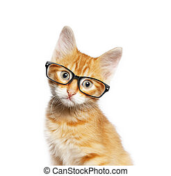 Red cat in glasses, isolated on white backgroundv