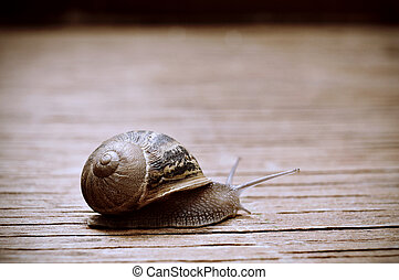 land snail on a wooden surface - closeup of a land snail on...