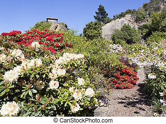 Rose Garden - The garden of roses in Port Chalmers, the...