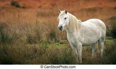 White Horse Standing In The Wild - Wild white horse stands...