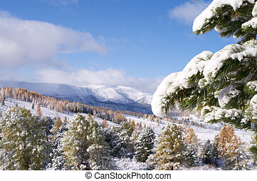 Snow covered fir branch - Branch of fir covered by snow whit...