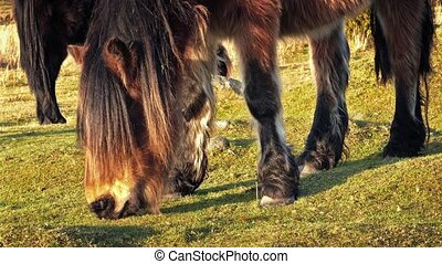 Wild Horse Eating Grass Closeup