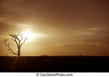 African sunset warm brown golden sky colors and tree