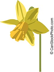 daffodil, Easter, vector, no gradient or opacity-effects