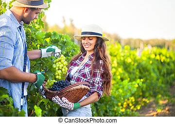Portrait of a young happy couple in vineyard during harvest...
