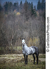 Lonely gray horse - Color image of a lonely gray horse.