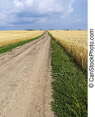 Empty countryside road through fields with wheat. Ukraine, Europe.
