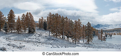 Mountain winter landscape - Panoramic view of winter forest...