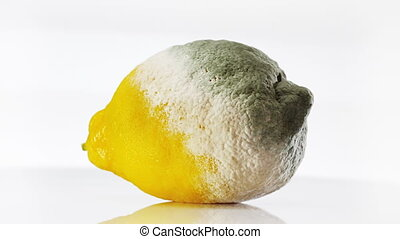 Rotten lemon covered with mold rotating over white...