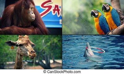 Zoo Animals Montage - Four scenes of animals in the zoo -...