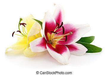 rosa, y, amarillo, lilies.,