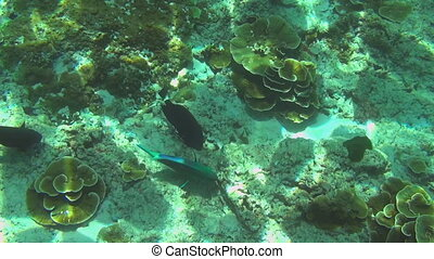 Tropical colourful fishes - Tropical underwater world,...