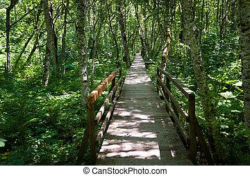 legno, ponte, attraverso, foresta, palude