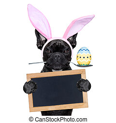 easter bunny dog - french bulldog dog with spoon in mouth...