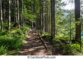 Hiking path in the beautiful forest of Black Lake - Popular...