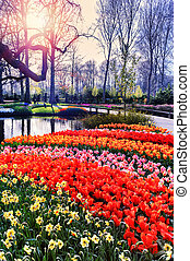Spring landscape with colorful seasonal flowers