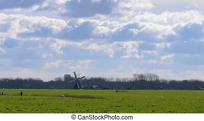 Historic windmill pasture Netherlan - Historic windmill in a...
