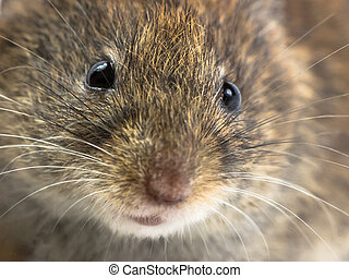 Mouse head close up