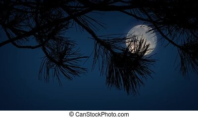 Moon Behind Spiky Tree Branches - Closeup of tree branches...