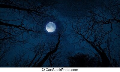 Looking Up At The Moon And Trees - Looking up in the woods...