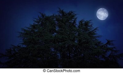 Huge Trees With Moon On Windy Night