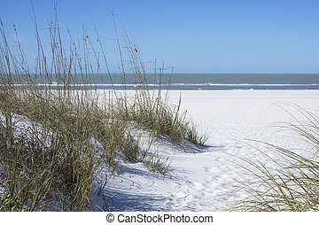 Sea oats and white sand dunes on beach in St Petersburg,...
