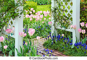 pink tulips with white trellis - Pink tulips and grape...