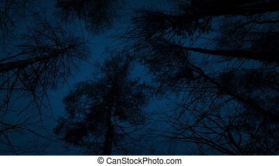 Moving Under Tall Trees In The Dark