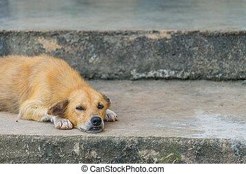 Lonely dog sleep on concrete floor