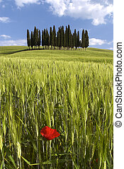 Landscape around Siena called Crete Senesi Siena Tuscany...