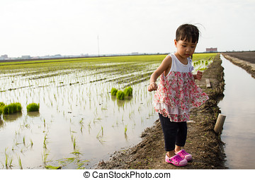 Asian Little Chinese Girl Standing at Rice Field