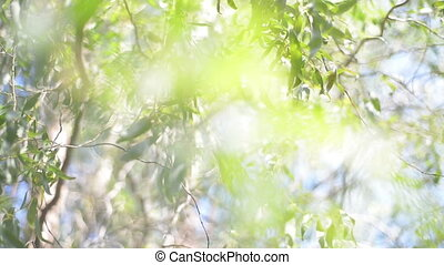 Nature background. green leaves. Blurred abstract bokeh with...