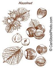 hazelnut set of sketches - hazelnut set of vector sketches...
