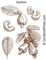 cashew set of sketches - cashew set of vector sketches on an...