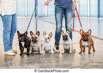 The French Bulldogs are different color next to each other -...