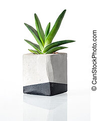 Plant in a concrete cubic pot