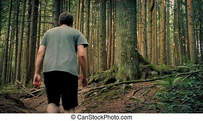 Man Walking On Rocky Forest Trail - Young man walks up...