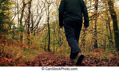 Man Walks Down Path In Woods - Man walking down trail on a...