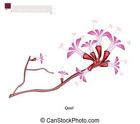 Qataf Flower, The National Flower of Qatar - Qatar Flower,...