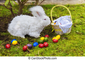 Fluffy easter angora bunny - Cute white fluffy angora bunny...