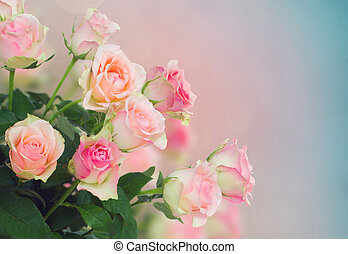 bouquet of pink  roses on blue and pink bokeh background
