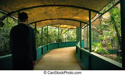 Tourist Walks Under Canopy In Zoo - Young man in summer...