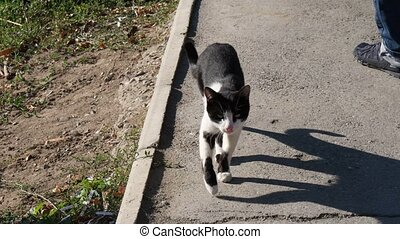 Stray feral cat walking outdoors to camera - Stray feral cat...