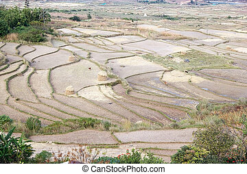 Terraced farmaland, Paro, Bhutan. Agriculture has a dominant...